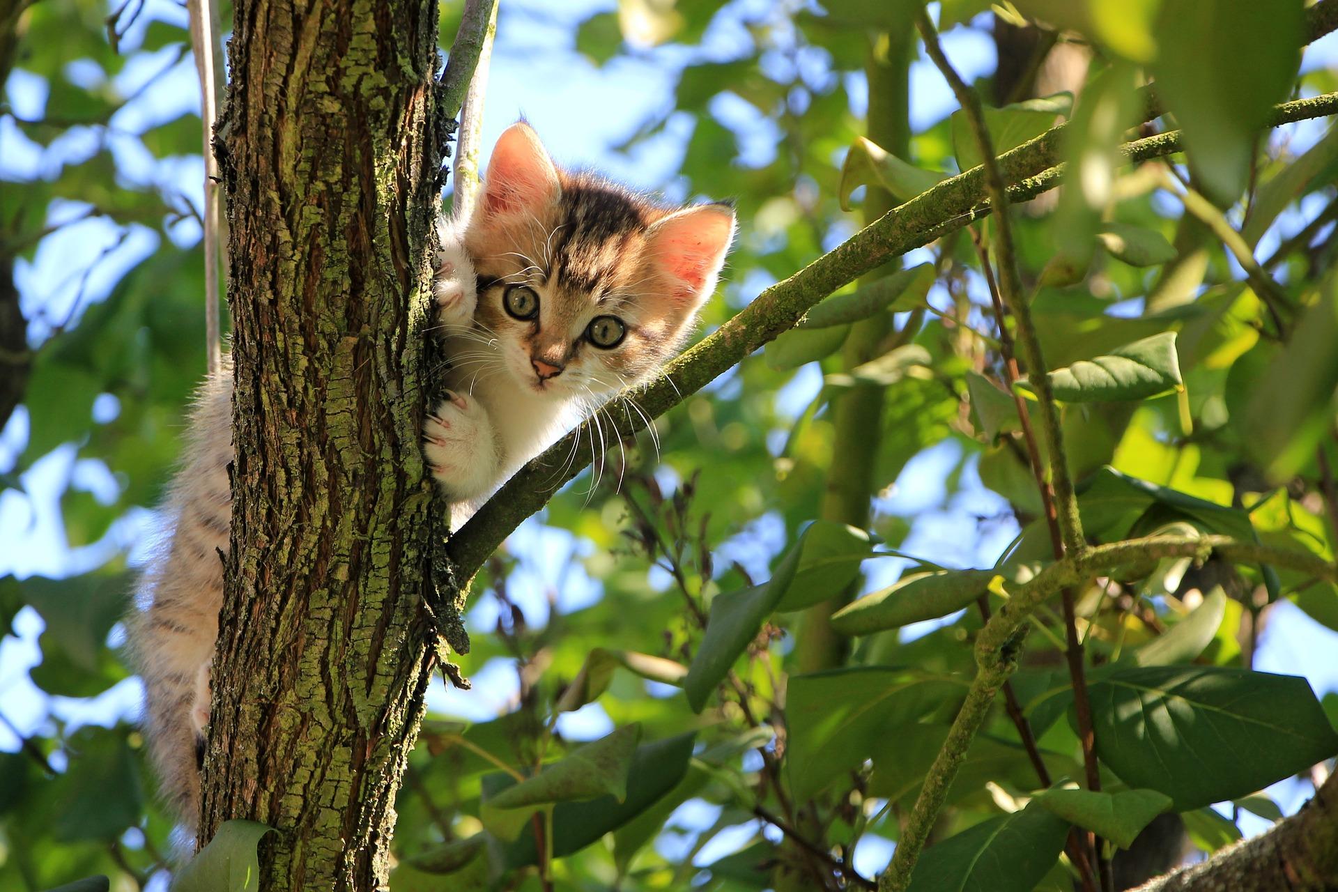 Młody kot na drzewie w ogrodzie