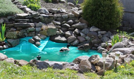 Oczko wodne w ogrodzie - idealne dla płazów