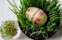 Owies na Wielkanoc: Jak i kiedy posiać owies, aby wyrósł na święta