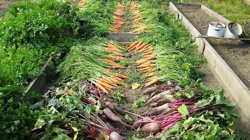 Plony ekologicznych warzyw