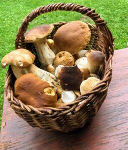 Borowiki w koszyku - grzyby idealne do suszenia