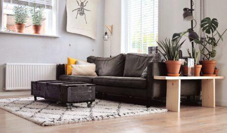 Czyste mieszkanie po dezynfekcji
