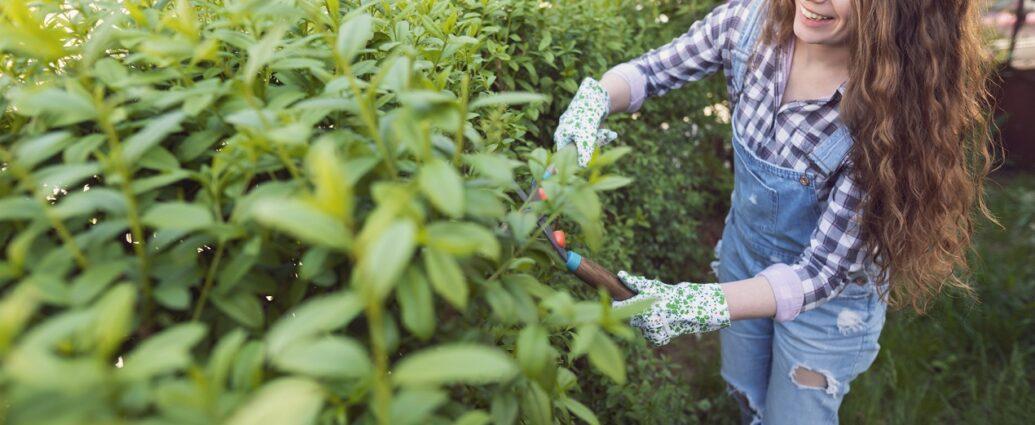 Przycinanie żywopłotu - jak wybrać odpowiednie krzewy do żywopłotu