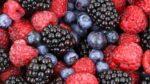 Owoce jagodowe - maliny, jeżyny i borówki - źródło odporności